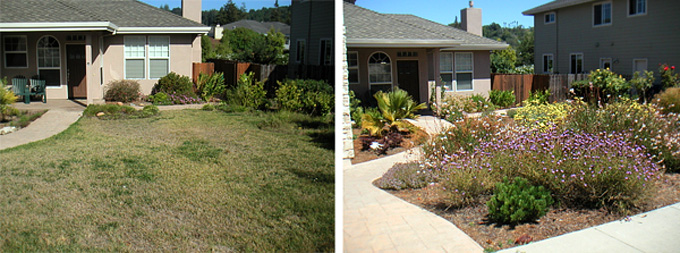 Lawn alternative in the Soquel Creek Water District